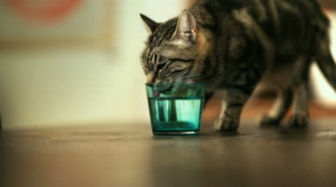 Cats can drink sea water to re-hydrate themselves