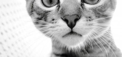 Top 10 Weird Facts about Cats