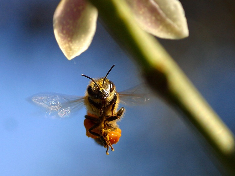 Respectable Bees