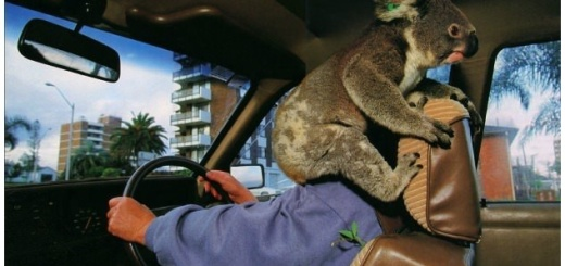 Some of the Strangest Animal Accidents