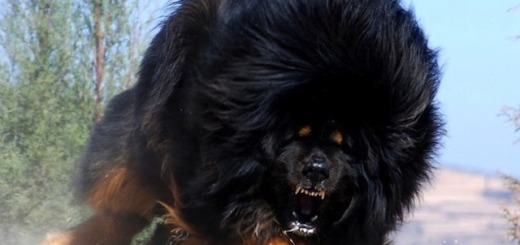 The most dangerous dog breeds