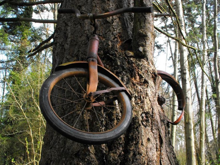 The bike in the middle of the tree