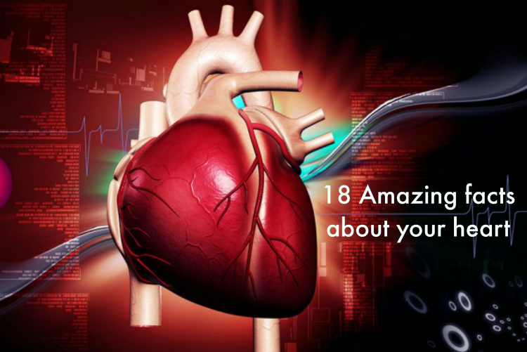 18 Amazing Facts About Your Heart