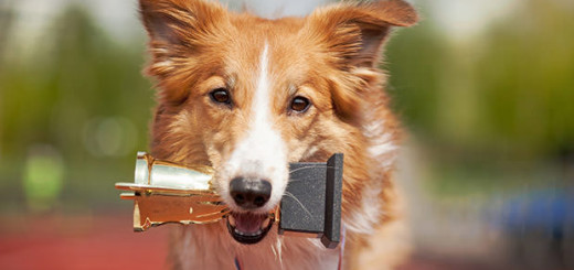 10 smartest dog breeds in the world - Is your pet in this list or not