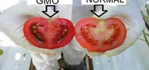 Do you want to how to Identify Genetically modified foods in the market Hop in!