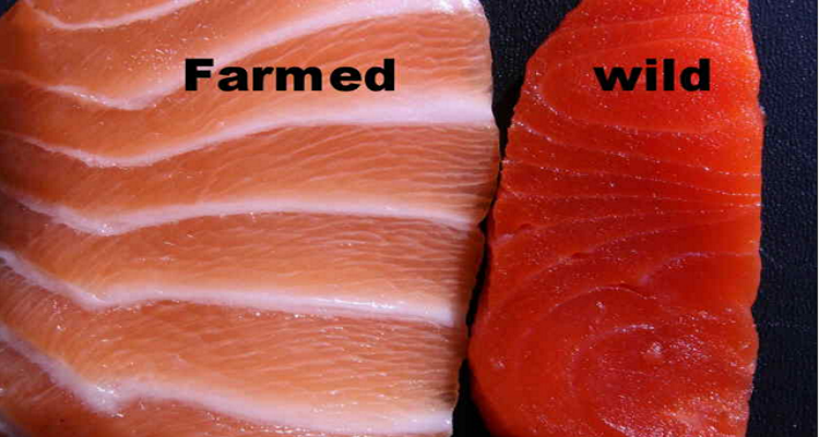 Wild caught fish or farmed fish which one is better for for Fish farming pros and cons