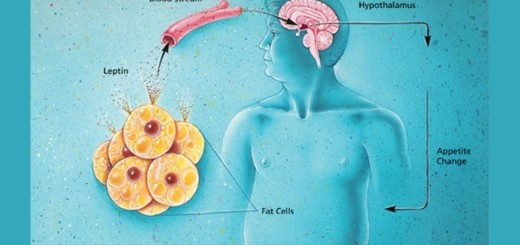 A study reports says obesity can lead to memory loss!