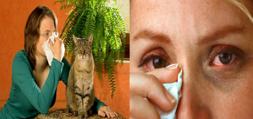 Your pet may mean the world to you but you need to know about cat allergies to stay healthy and safe too!!