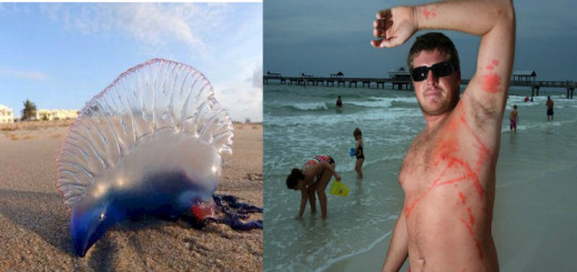 If you see Portuguese man o' war at the beach, DO NOT TOUCH IT or go near it!