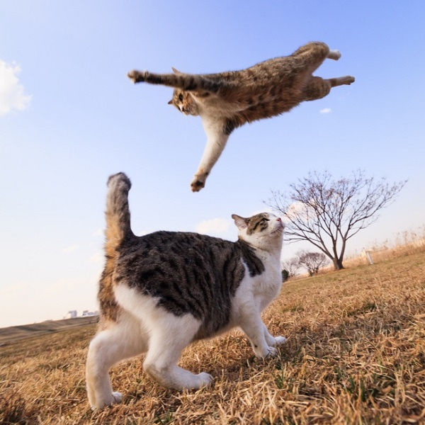 Cats are Flying!