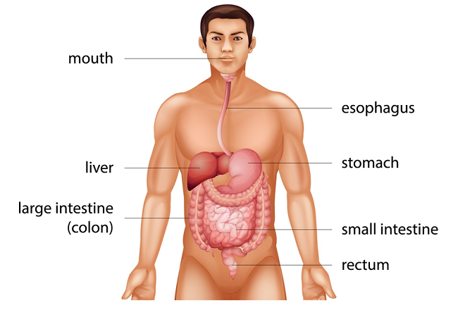 Symptoms and cause of Colon Cancer