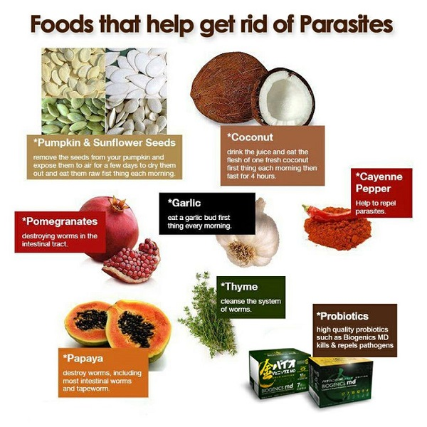 Best Foods To Get Rid Of Parasites