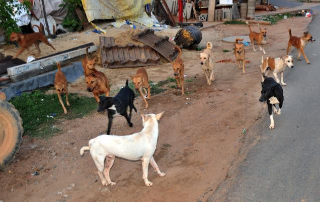The Life of Stray Dogs