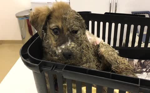 puppy who underwent the worst type of torture