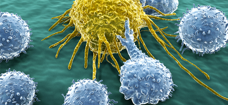 immunotherapy first line defense against cancer