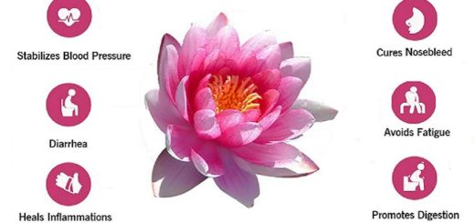 10 Amazing Health Benefits of the Lotus Plant