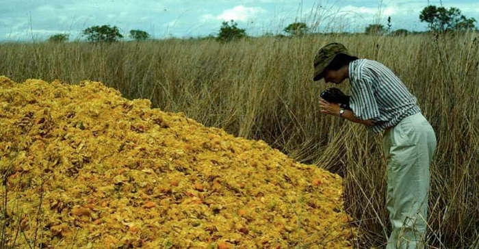 Image result for thousands of orange peels dumped in a field