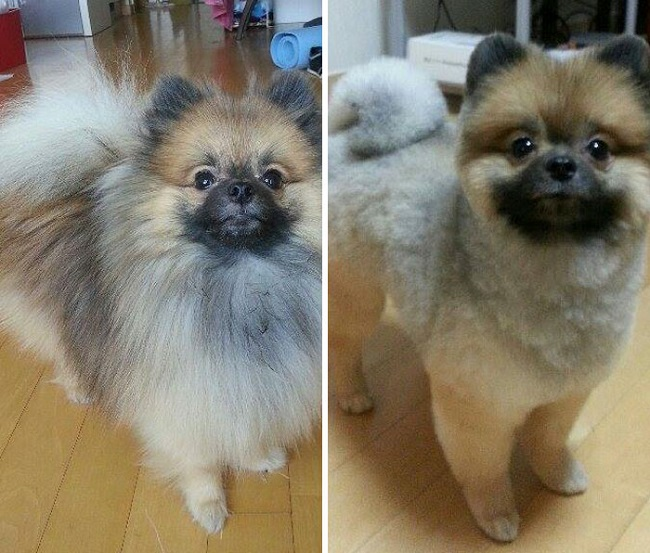 dog before and after haircut