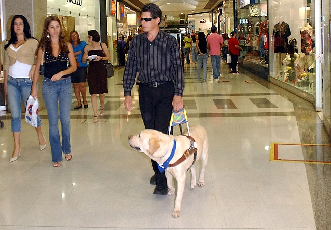 Guide dogs for the blind1